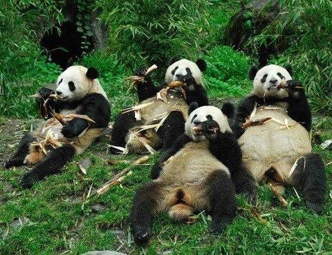 Panda life hacks