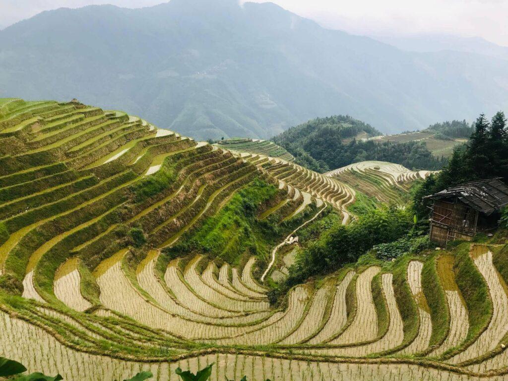 Longji Rice Terrace Tour